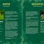 WildkraeuterSmoothies_4