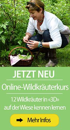 Online Wildkräuterkurs
